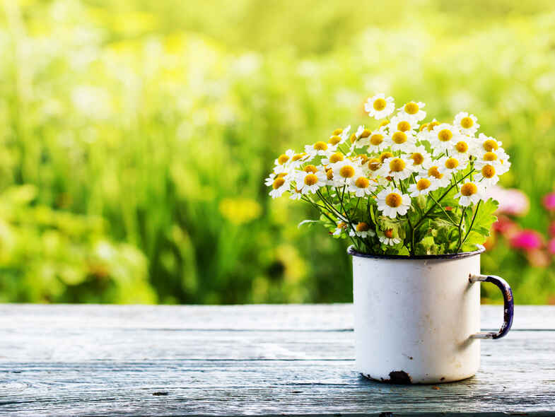 Springtime health: allergy tips