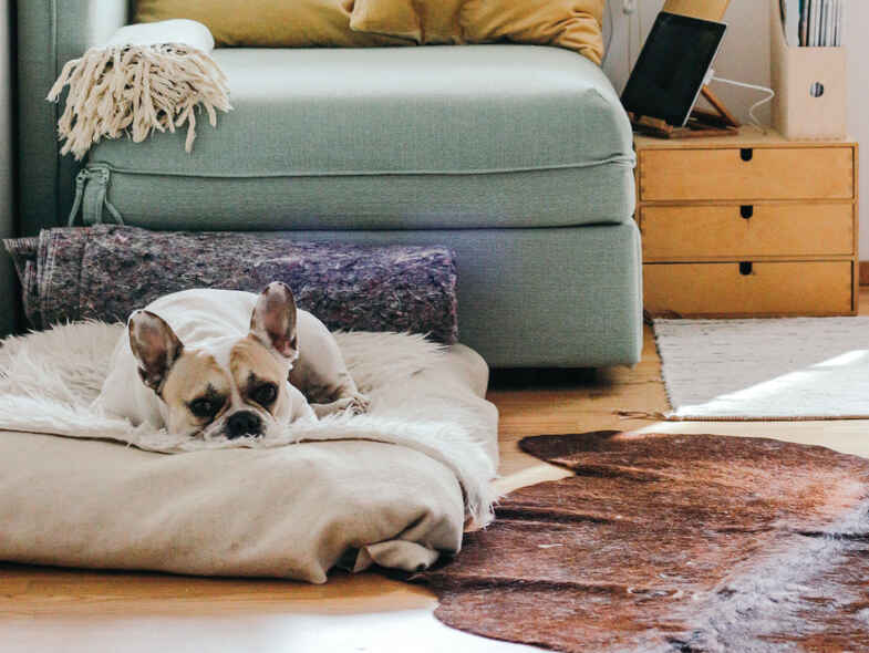 A Guide to Pets in Rental Properties